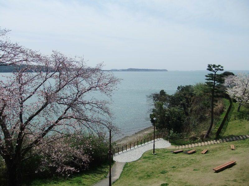 桜もきれいに咲いており、浜名湖と相まってとてもいい景色です。