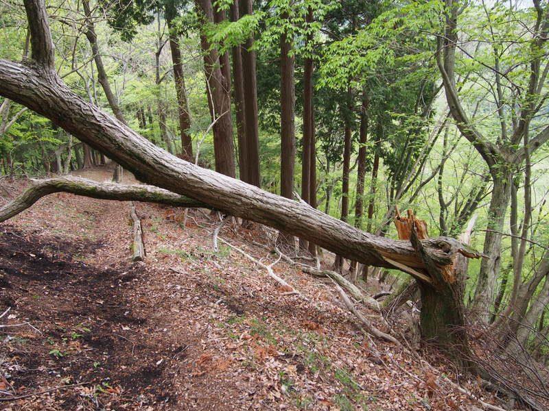 道を塞ぐ倒木。倒木も避けられる体制で進みましょう