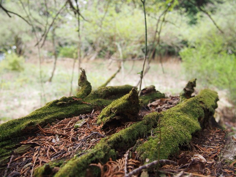 神秘的な苔