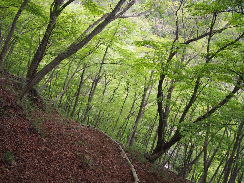 さらに下ると再び森の中へ入ります。綺麗な緑色です。