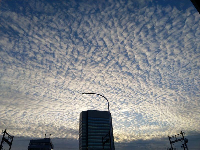 羊雲がきれいだったので撮影した一枚